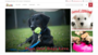 Prime Pet Source is the Best Online Pet Supply Store Online