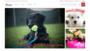 Prime Pet Source is the Best Online Pet Supply Store Online