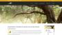 ALMASOL Premium-Olivenöl für den Feinschmecker
