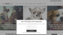 dog friendly places reviewed at thisdogslife.co