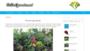 Jakie donice ogrodowe wybrać? Który materiał: drewno, ceramika czy plastik? RANKING 2018 doniczek na CodoOgrodu.net