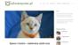 Szelki i drapak dla kota