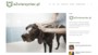 Szampon i odżywka dla psa - RANKING 2019