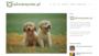 Wyprawka dla psa - co kupić dla swojego czworonoga?