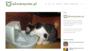 Jaką miskę dla kota kupić? RANKING 2019